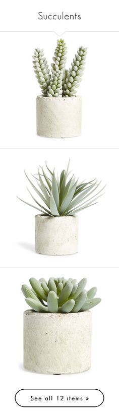 """""""Succulents"""" by mplusk ❤ liked on Polyvore featuring home, home decor, floral decor, moss green, modern home accessories, modern home decor, extra, filler, flowers and plants"""