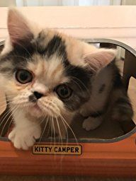 How utterly adorable is this little kitty having a great time glamping in their Kitty camper! LOVE! The purr-fect cat play house and cat toy, available on Amazon. Just click the picture!