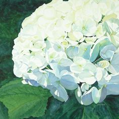 Hydrangea Painting by Lynda Bee White - Hydrangea Fine Art Prints and Posters for Sale