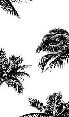 Fond ecran feuille palmier