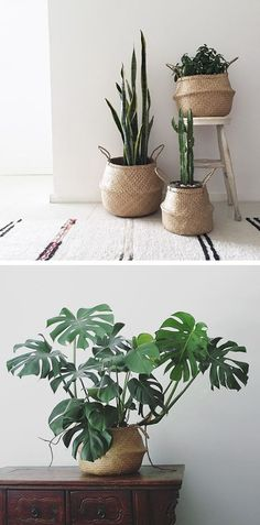 9 Great Indoor Plant Ideas If you are looking for easy plants decoration tips and ideas. So here are 7 different way to how to decorate indoor plants in your living room. Botanical Interior, Interior Plants, House Plants Decor, Plants For Living Room, Plants In Bedroom, Decoration Plante, Plant Basket, Deco Floral, Garden Planters