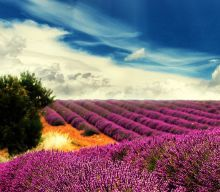 13 Amazing Photos of Lavender Fields that will Rock your World