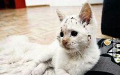 Cats will take over the world. (via oowot.com)
