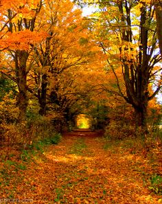 Long tunnels of fall lights (by pbruch)