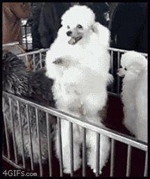 Imagenes Gif Divertidas De Perritos Bailando