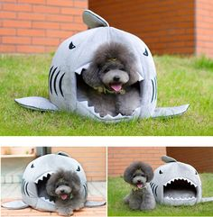 Pets Product Shark Dog House Warm Indoor Kitten Dog Cat Sofa Bed Puppy Pet House with Mat Small Larger Dog Bed Kennel For Pet Puppy Beds, Pet Beds, Pet Puppy, Dog Cave, Cheap Dog Beds, Miniature Schnauzer Puppies, Schnauzer Puppy, Orthopedic Dog Bed, Small Cat
