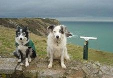 Dog Walks in North #Devon