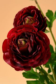 """19"""" RANUNCULUS BUSH BURGUNDY, GandGwebStore.com has a wide variety of silk flowers in different colors and sizes for all your decoration needs."""
