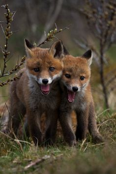 Find images and videos about nature, animals and fox on We Heart It - the app to get lost in what you love. Nature Animals, Animals And Pets, Baby Animals, Cute Animals, Beautiful Creatures, Animals Beautiful, Fennec, Pet Fox, Tier Fotos