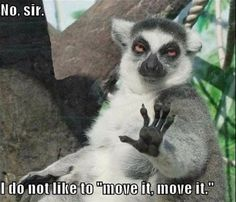 No Sir, I'm Not That Kind Of Lemur