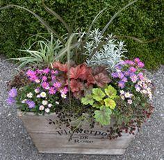 ハルディン | ヒューケラで寄せ植えを楽しむ! Foliage Plants, Potted Plants, Container Plants, Container Gardening, Outdoor Plants, Indoor Outdoor, Deco Floral, Flower Pots, Flowers