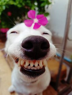 Smiling animals with braces. Smiling Animals, Smiling Dogs, Happy Animals, Animals And Pets, Funny Animal Memes, Dog Memes, Funny Animal Pictures, Funny Dogs, Cute Puppies
