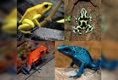 16 beautiful but deadly frogs