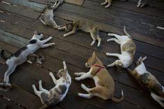 Zu Gast bei Freunden  (04.02.16)      Einer ist anders als die anderen - und das ist auf den ersten Blick gar nicht so leicht zu erkennen: In Rangun, Burma, liegt ein Hund zwischen Katzen entspannt auf dem Boden. Sie alle fanden in einem Heim Unterschlupf, das sich um Straßentiere kümmert.