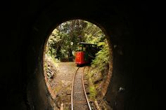 Driving Creek Railway, Potteries & Coromandel Zipline Tours - narrow-gauge mountain railway, built mostly by hand by Barry Brickell & New Coromandel Zipline Tour Pine, Mountain, Pottery, Clay, Tours, Country, Building, Wood, Pine Tree
