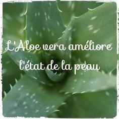 Aloe vera: a natural anti-aging Masque Aloe Vera, Aloe Vera Face Mask, Aloe Vera Hair Growth, Aloe Vera For Hair, Skin Care Regimen, Skin Care Tips, Gel Aloe, How To Apply Lipstick, Flaky Skin