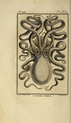 Items similar to Vintage poster Giant Kraken Octopus Poster Natural History Art Print: Scientific Illustration Art Print on Etsy Vintage Prints, Vintage Posters, Tatto Viking, Kraken Sea Monster, Le Kraken, Octopus Print, Octopus Artwork, Octopus Drawing, Art Antique