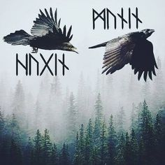 When I should be writing product descriptions for the Huginn and Muninn bracelets for the new website and instead all Im doing is playing in photoshop. Viking Raven, Viking Art, Viking Warrior, Viking Life, Norse Runes, Norse Pagan, Norse Mythology, Norse Tattoo, Viking Tattoos