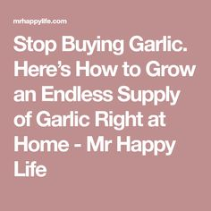 Stop Buying Garlic. Here's How to Grow an Endless Supply of Garlic Right at Home - Mr Happy Life