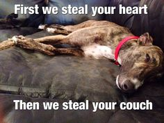 First your heart, then your couch! Yep! Happened to us - our little sweet pea moved into our bed too.  They make awesome snugglers.
