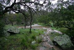 Brisbane Ranges National Park - Brisbane Ranges National Park offers excellent opportunities for bushwalk, picnics, camping and scenic drives. Discover wide array of flora and fauna as you go along. There are about 619 native plant species found in the ranges.