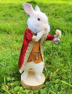 Taxidermy White Rabbit, Alice in Wonderland Taxidermy, Alice In Wonderland, Rabbit, Handmade Gifts, Unique, Animals, Vintage, Etsy, Art