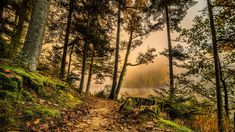 Forest Trail Trees Grass HD Wallpaper Need Watercolor Wallpaper Iphone, Iphone Wallpaper Fall, Widescreen Wallpaper, Locked Wallpaper, Forest Wallpaper, Nature Wallpaper, Wallpaper Free Download, Wallpaper Downloads, Iphone Wallpaper Inspirational