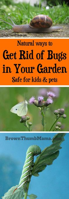 How to get rid of the bugs in your garden naturally--without danger to kids or pets. Also tips on how to keep the good bugs around and how to identify them.