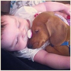 Too adorable: baby and doxie are sleeping buddies
