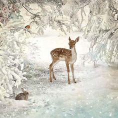 WC040 Winter Glade