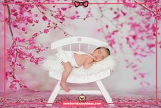 Wooden white chair pose newborn photo shoot Newborn Baby Photography, Newborn Photos, Chair Pose, Bassinet, Savannah Chat, Photo Shoot, Poses, Pictures, Ideas