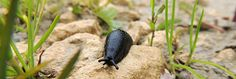 Jardiner bio contre les limacesPour protéger vos plantations et vos jeunes pousses des limaces, un petit truc facile : répandez une bande de sable autour des zones à protéger. Cela suffira pour que rongeurs et limaces ne passent pas.  Dans le même genre, vous pouvez disposer des copeaux de bois, de la sciure, etc… qui feront barrage aux limaces et escargots.