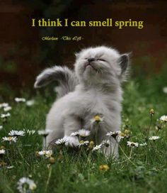 I think I can smell Spring! Let's hope so! #Spring #Kitten