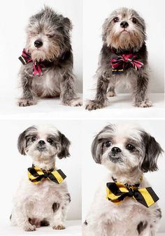 Accomplished photographer Richard Phibbs donates his time to photograph pets that need homes. Miles and I wish more talented photographers would donate their time for this cause. Adopt!
