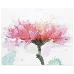 Chrysanthemum Canvas Wall Art (54 CAD) ❤ liked on Polyvore featuring home, home decor, wall art, pink, pink wall art, canvas home decor, pink flamingo wall art, floral wall art and floral home decor