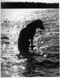William Wegman.Contemplating Art, Life and Photography, 1979. Ink on silver gelatin print, 48.3 x 34.9 cm.