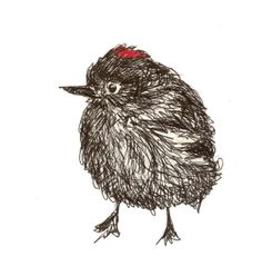 ruby-crowned kinglet - ink drawing, tracy jager