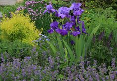 Part More beautiful iris and companions * many photos* - Iris Forum - GardenWeb Lawn And Garden, Garden Beds, Garden Plants, Garden Tools, Outdoor Landscaping, Landscaping Ideas, Outdoor Decor, Lawn Sprinklers, Garden Borders