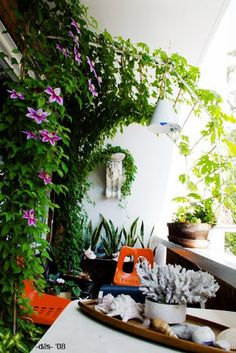 Trellis - Same balcony flowers in bloom. Trellis - Same balcony flowers in bloom. Balcony Shade, Balcony Privacy, Balcony Flowers, Balcony Plants, Patio Shade, Privacy Screens, Garden Privacy, Privacy Shades, Privacy Plants