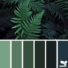 Twilight ferns