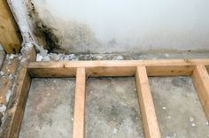 16 best myglusveppur images damp basement mold removal remove mold rh pinterest com