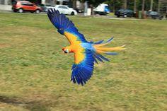 Pretty Birds, Love Birds, Beautiful Birds, Animals Beautiful, Colourful Birds, Exotic Birds, Animals Of The World, Animals And Pets, Parrot Tattoo