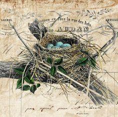 Shoregirl's Creations: Birds Nest Freebie