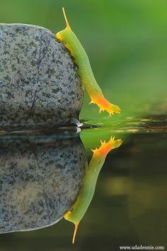 "Photo ""caterpillar reflect"" by Uda Dennie :)"