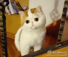 CyBeRGaTa: Newest Internet Cat Sensations - Snoopy & Fat Cat in Art