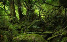 mossy knoll