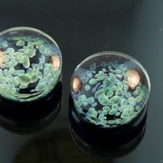 zoa plugs, these look like cells <3