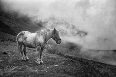 horse by arp