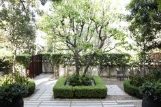 Before and After: A Grande Dame in LA's Hancock Park: Gardenista