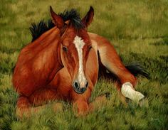 Tuckered Out - Resting Foal